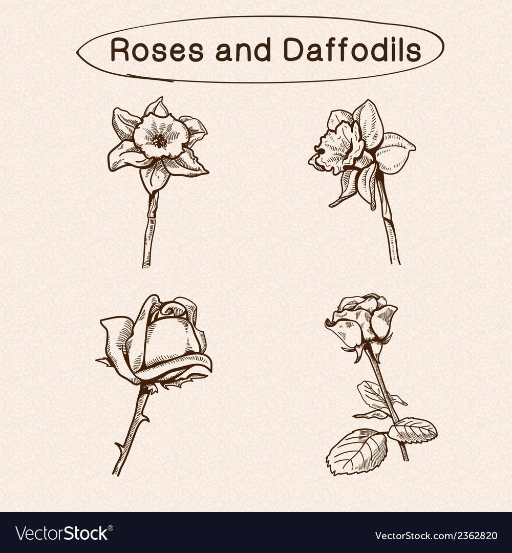 Flowers sketch elements vector | Price: 1 Credit (USD $1)