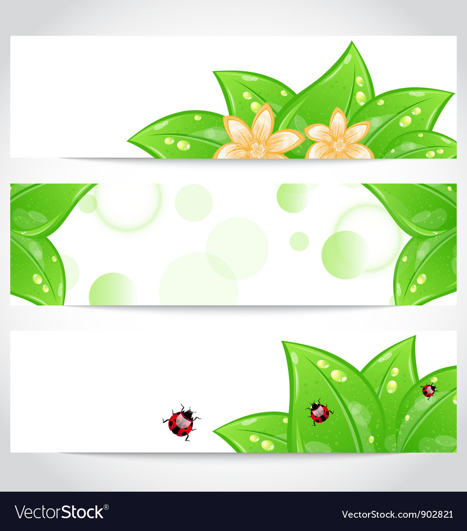 Set of bio concept design eco friendly banners vector | Price: 1 Credit (USD $1)