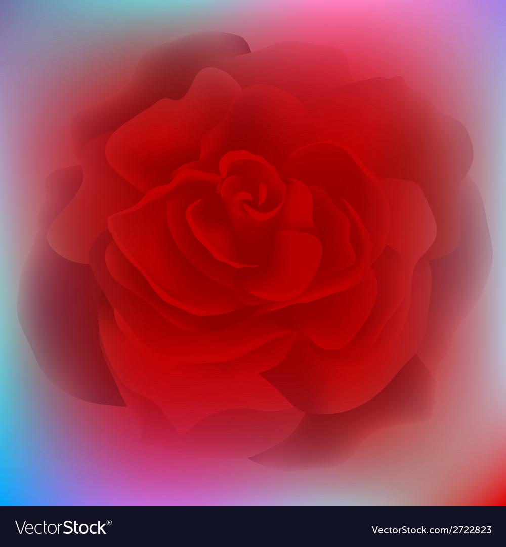 Flower rose blossom bloom floral background summer vector | Price: 1 Credit (USD $1)