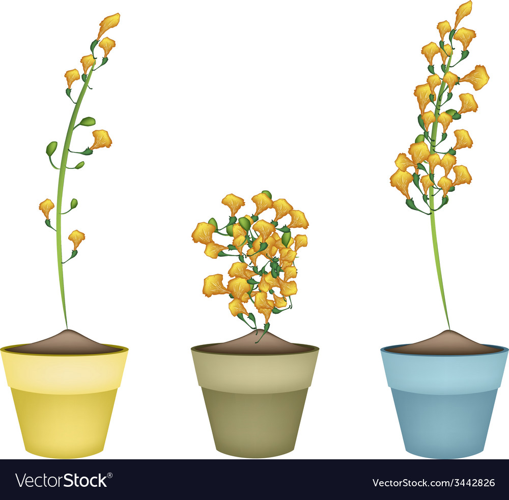 Yellow padauk flower in ceramic flower pots vector | Price: 1 Credit (USD $1)