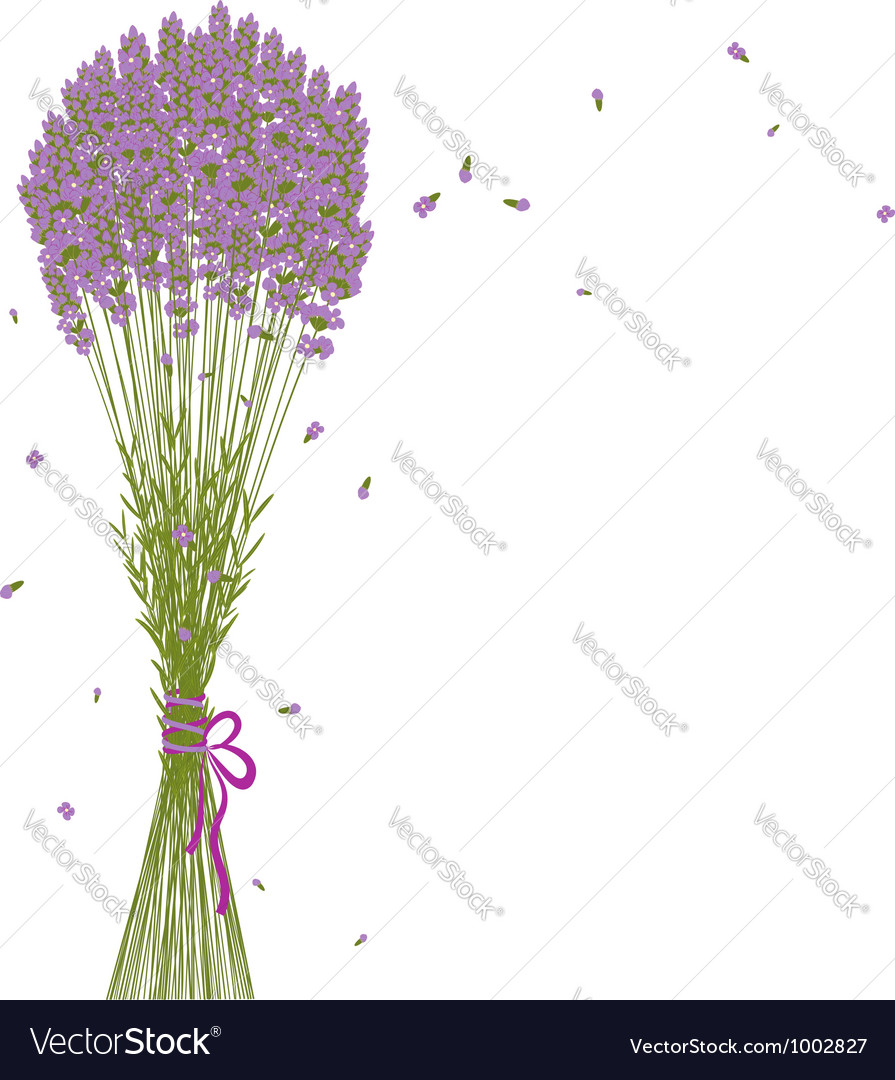 Purple lavender flower background vector | Price: 1 Credit (USD $1)