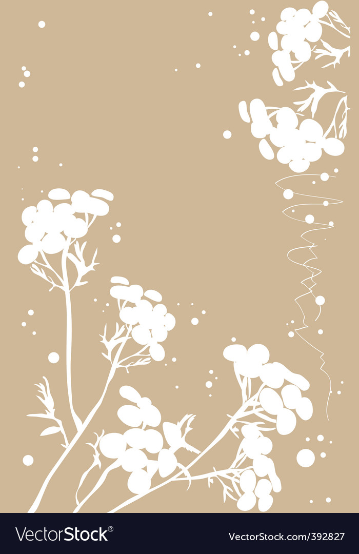 White tansy vector | Price: 1 Credit (USD $1)
