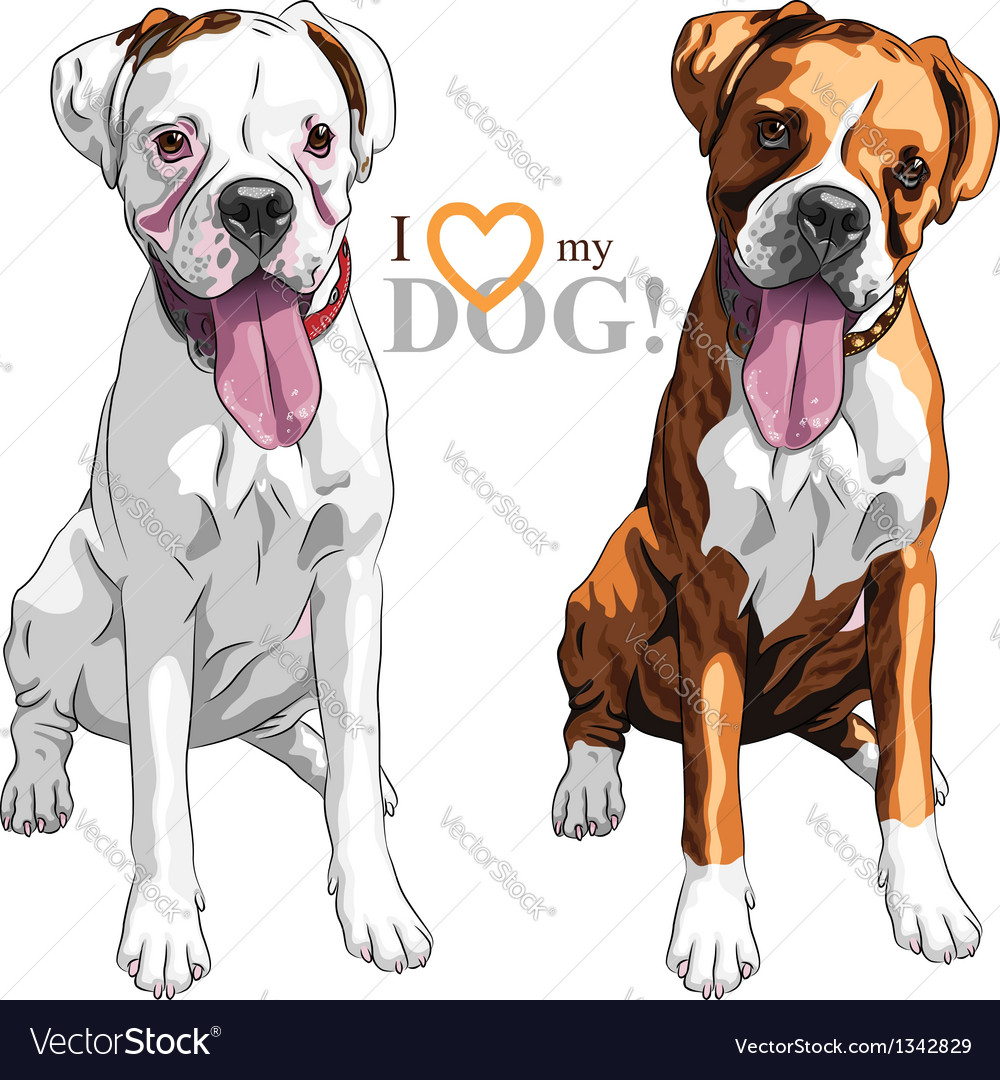 Sketch two domestic dog boxer breed vector | Price: 3 Credit (USD $3)