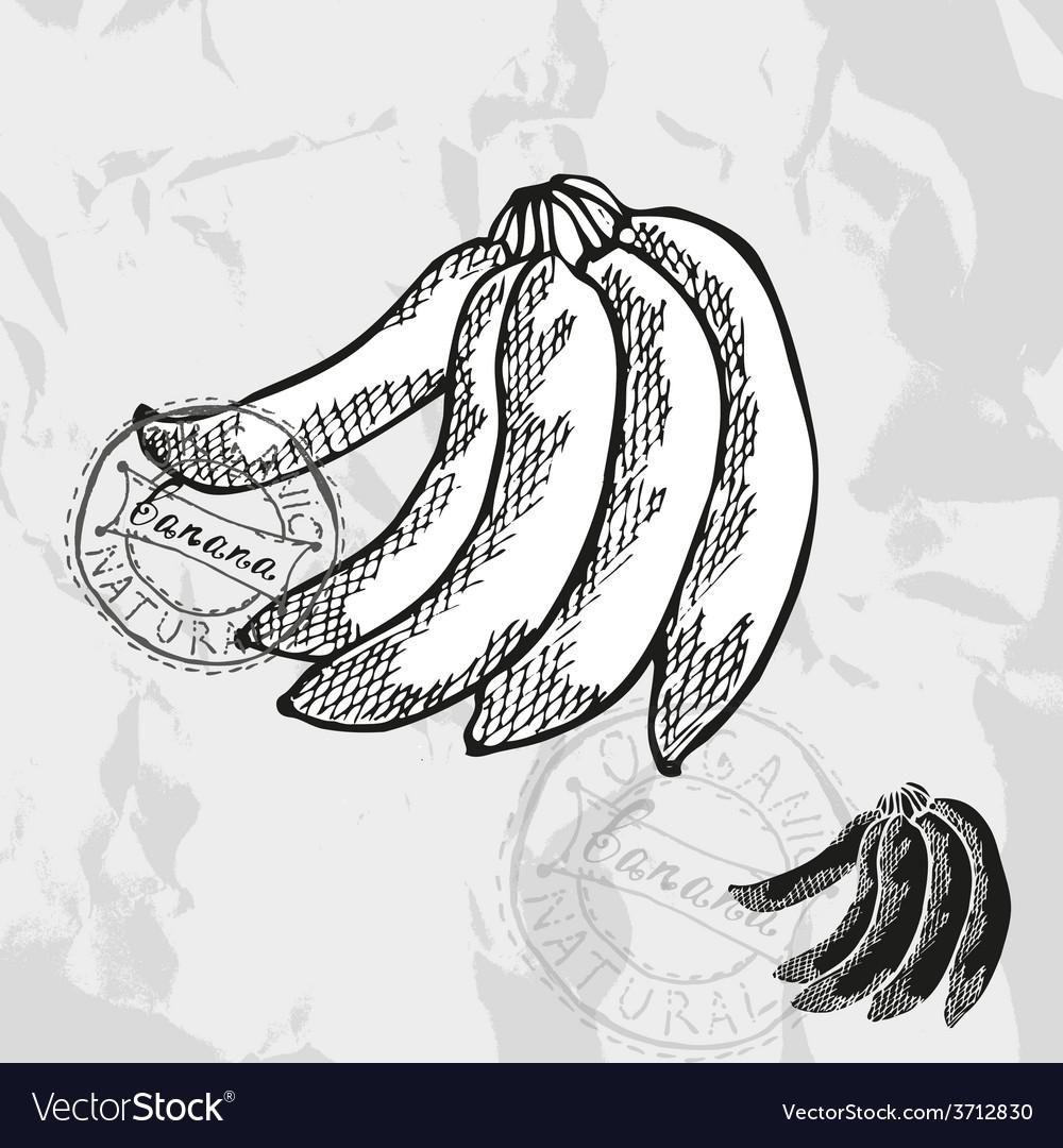Hand drawn decorative banana vector | Price: 1 Credit (USD $1)