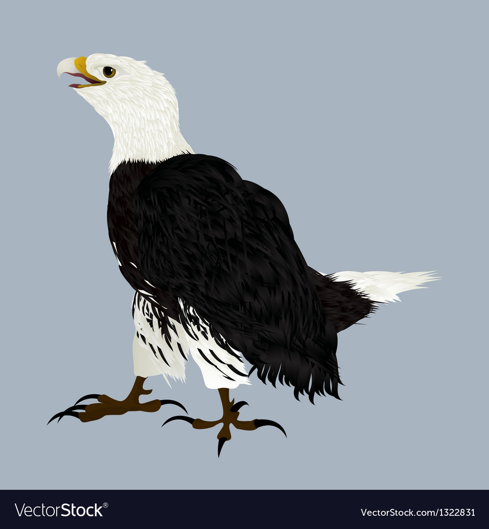 American eagle vector | Price: 1 Credit (USD $1)