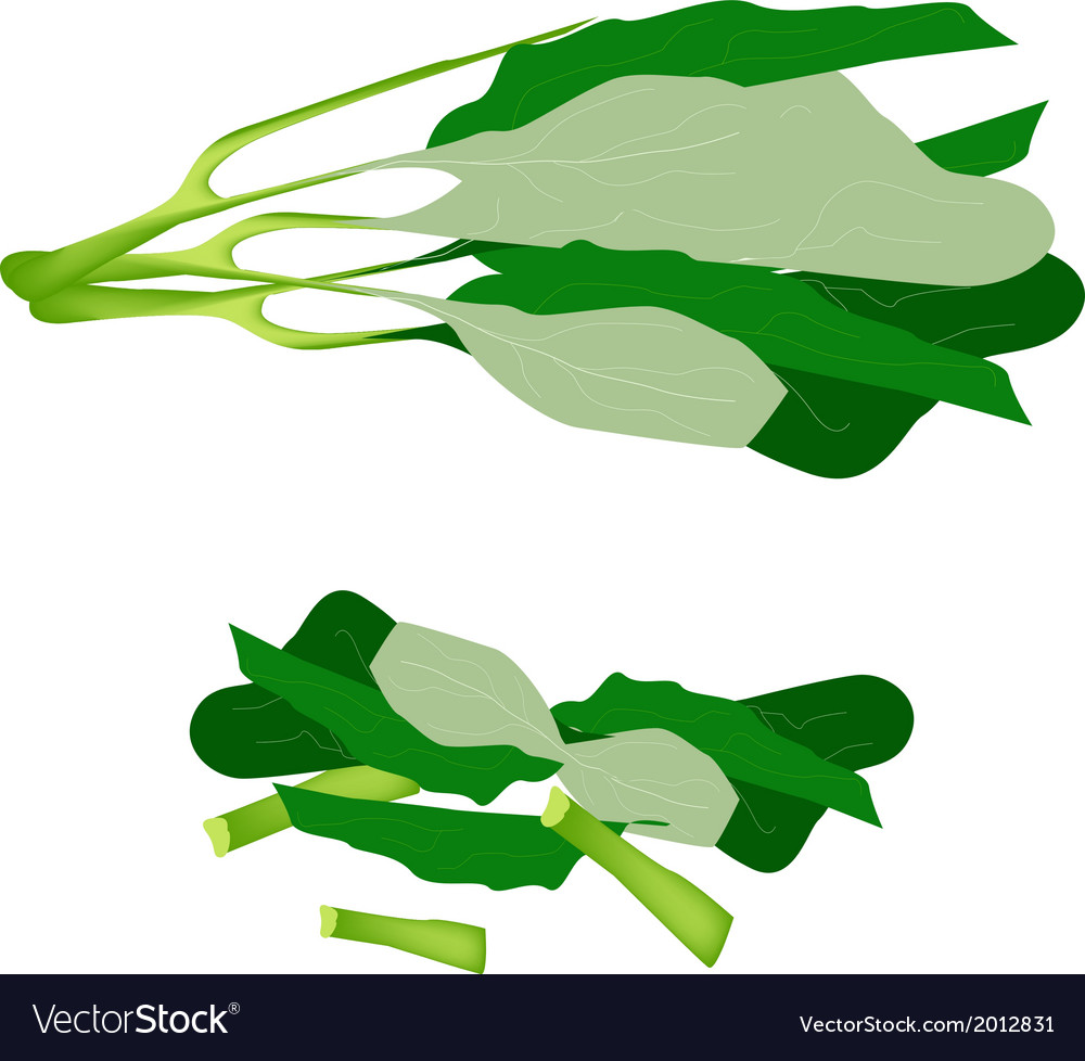 Fresh green chinese broccoli on white background vector | Price: 1 Credit (USD $1)