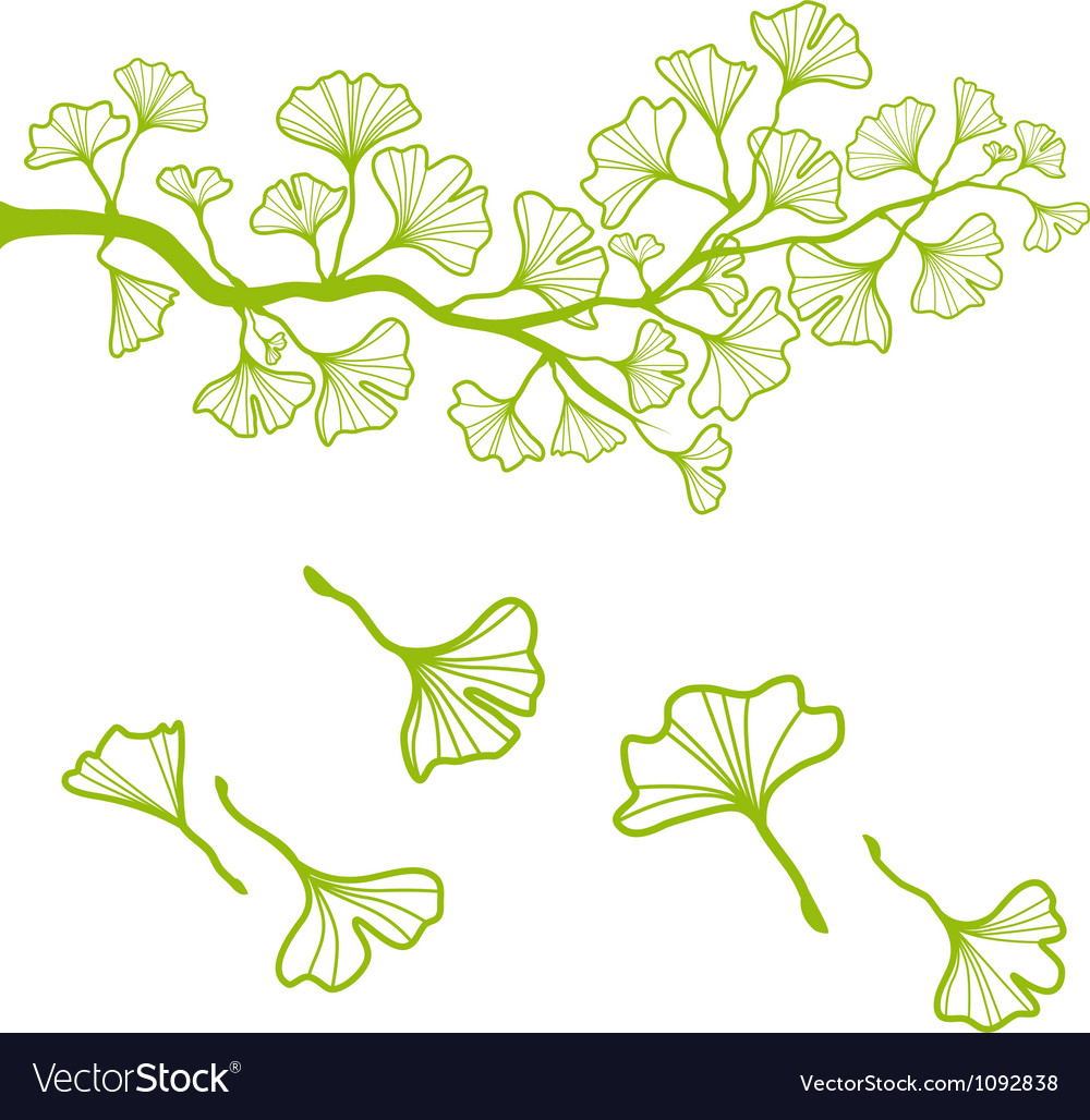 Ginkgo branch with leaves vector | Price: 1 Credit (USD $1)