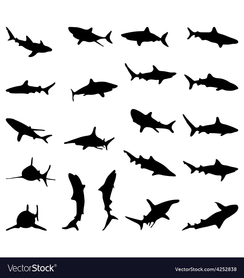 Sharks vector | Price: 1 Credit (USD $1)