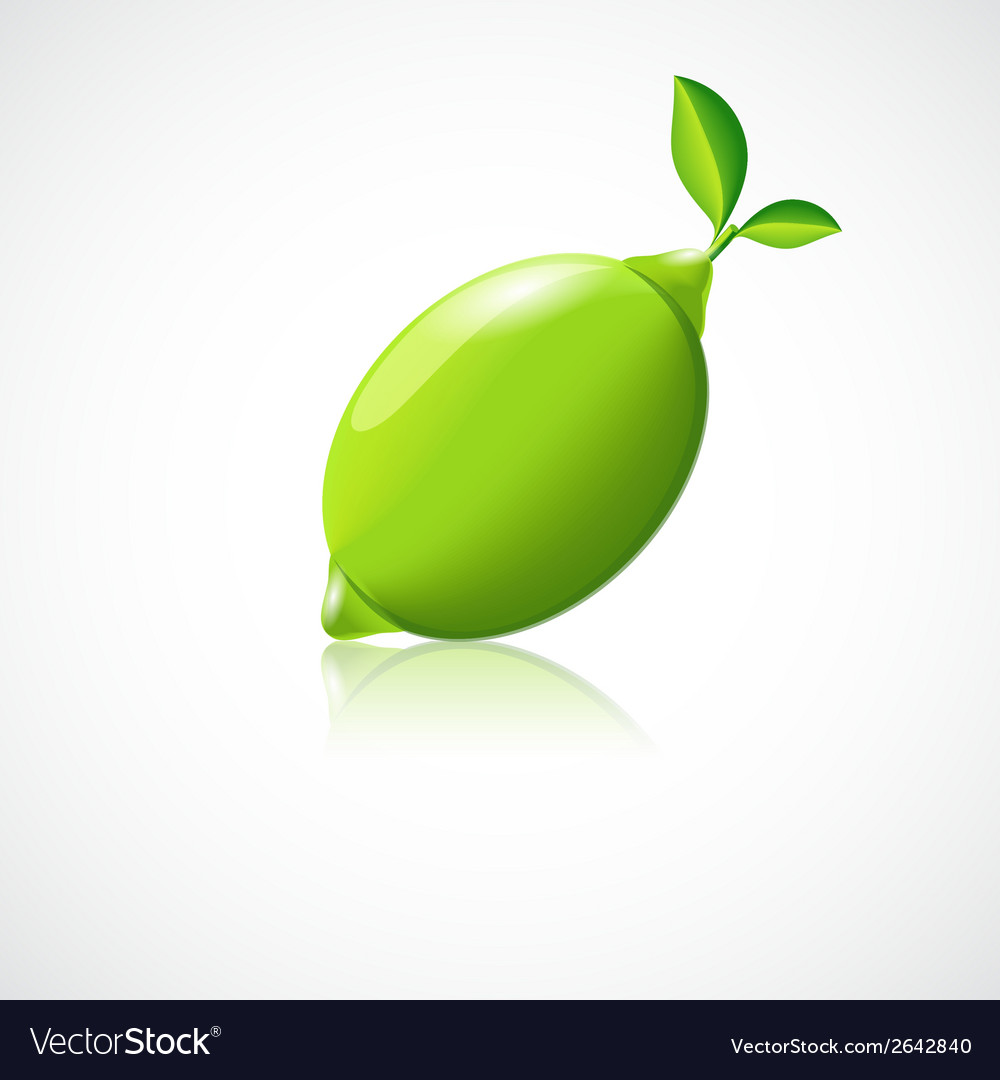 Lime fruit icon vector | Price: 1 Credit (USD $1)