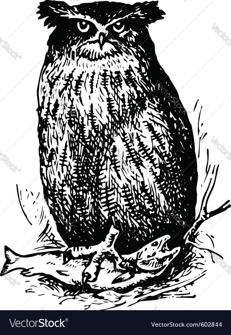 Bird ketupa blakistoni vector | Price: 1 Credit (USD $1)