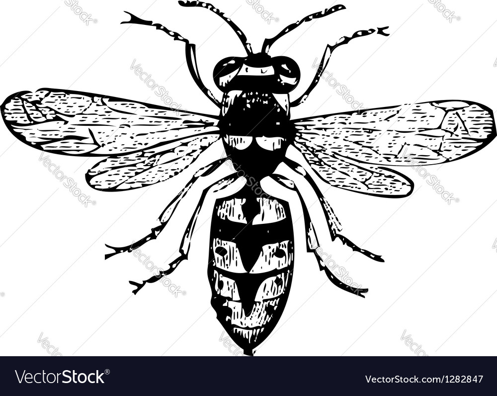 Old wasp engraving vector | Price: 1 Credit (USD $1)