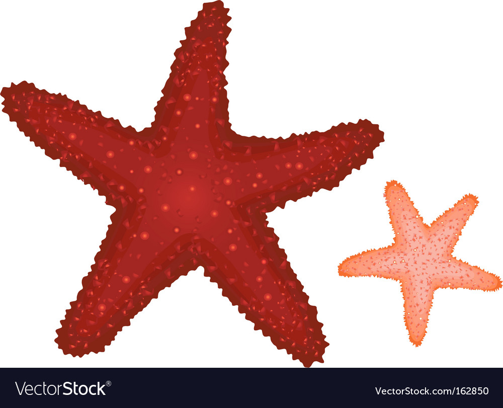Coral starfishes vector | Price: 1 Credit (USD $1)