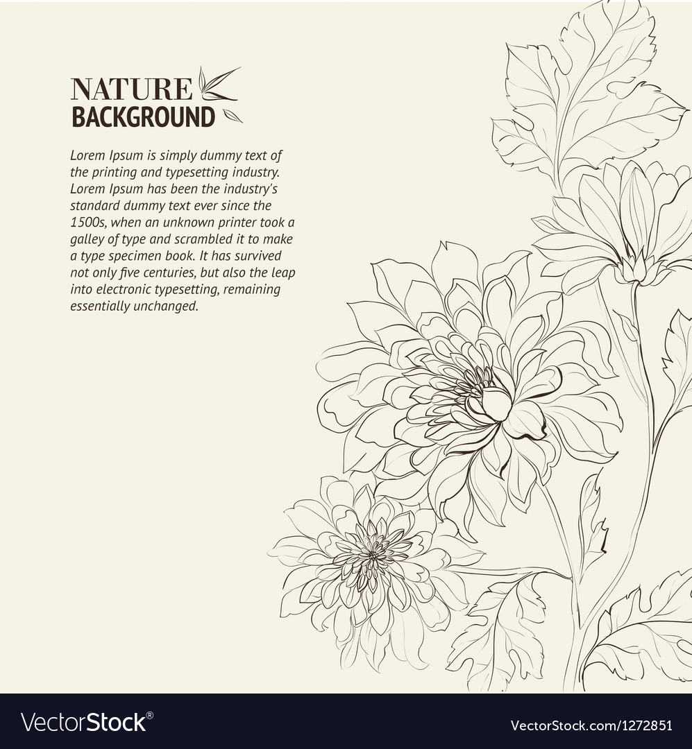 Branch of chrysanthemum vector | Price: 1 Credit (USD $1)
