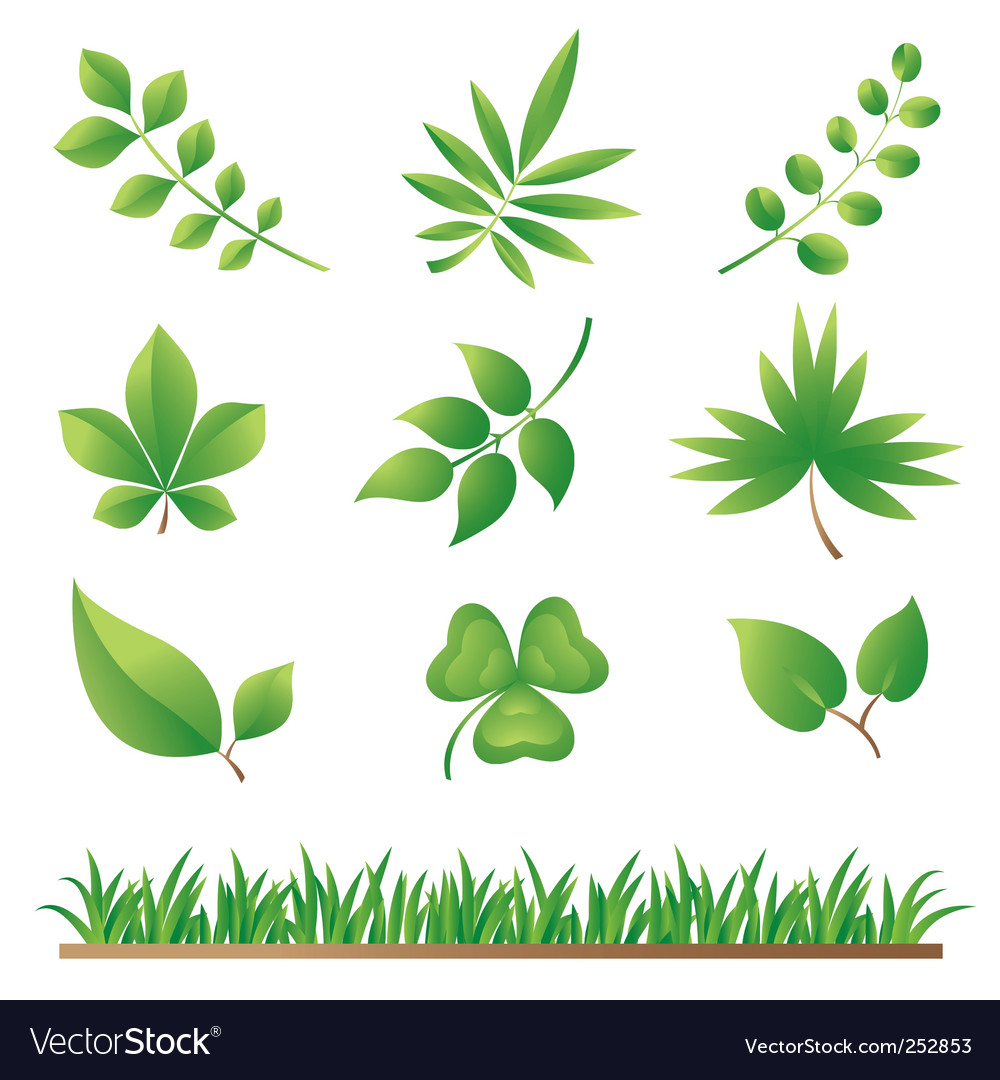 Grass and leaves vector | Price: 1 Credit (USD $1)