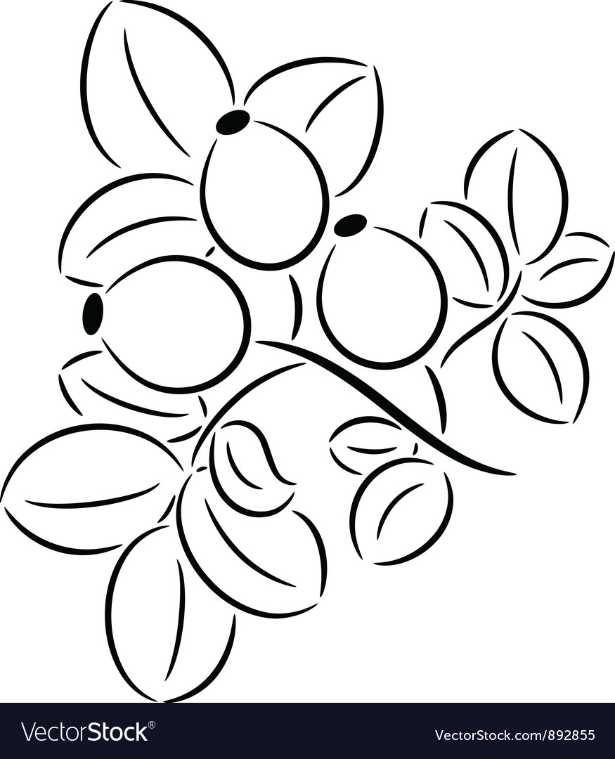 Rose-hips vector | Price: 1 Credit (USD $1)