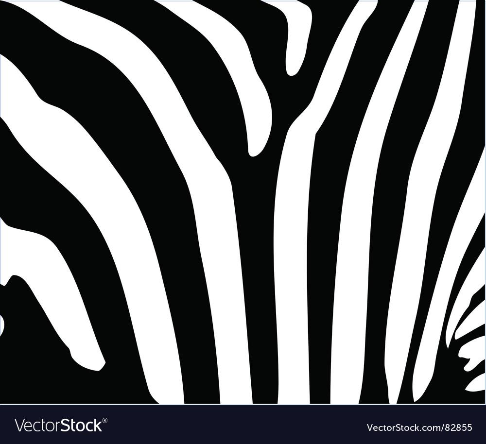 Zebra stripes vector | Price: 1 Credit (USD $1)