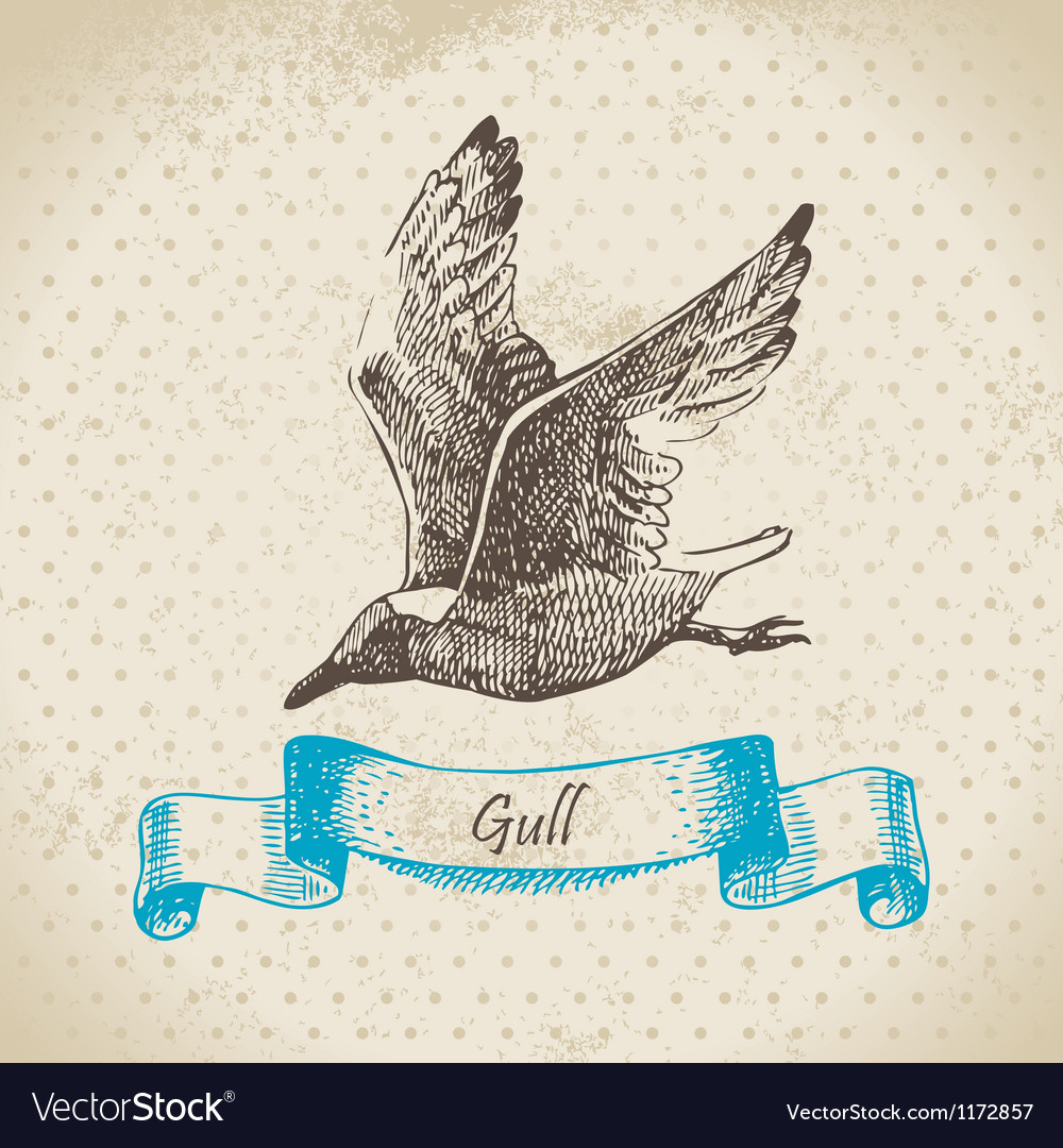 Gull hand drawn vector | Price: 1 Credit (USD $1)