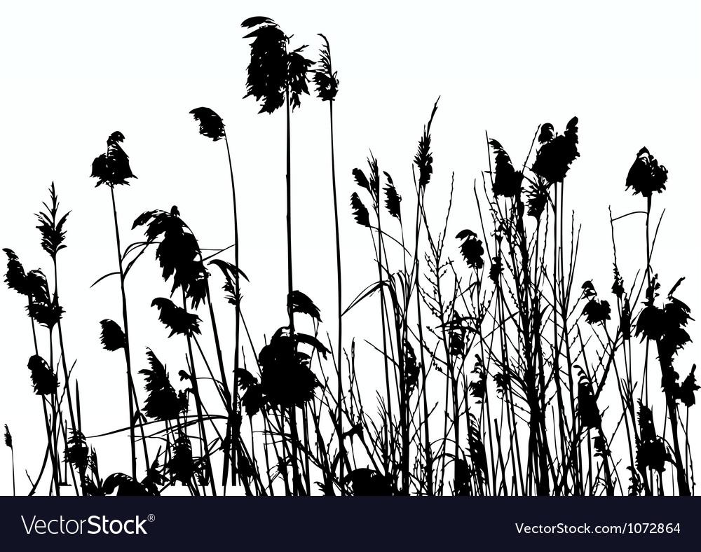 Reeds vector   Price: 1 Credit (USD $1)