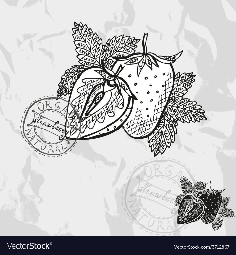 Hand drawn decorative strawberries vector | Price: 1 Credit (USD $1)