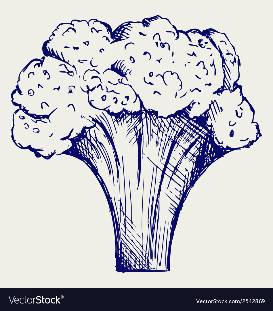 Fresh broccoli vector | Price: 1 Credit (USD $1)