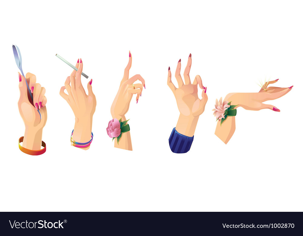 Set of beautiful female hands 2 vector | Price: 3 Credit (USD $3)