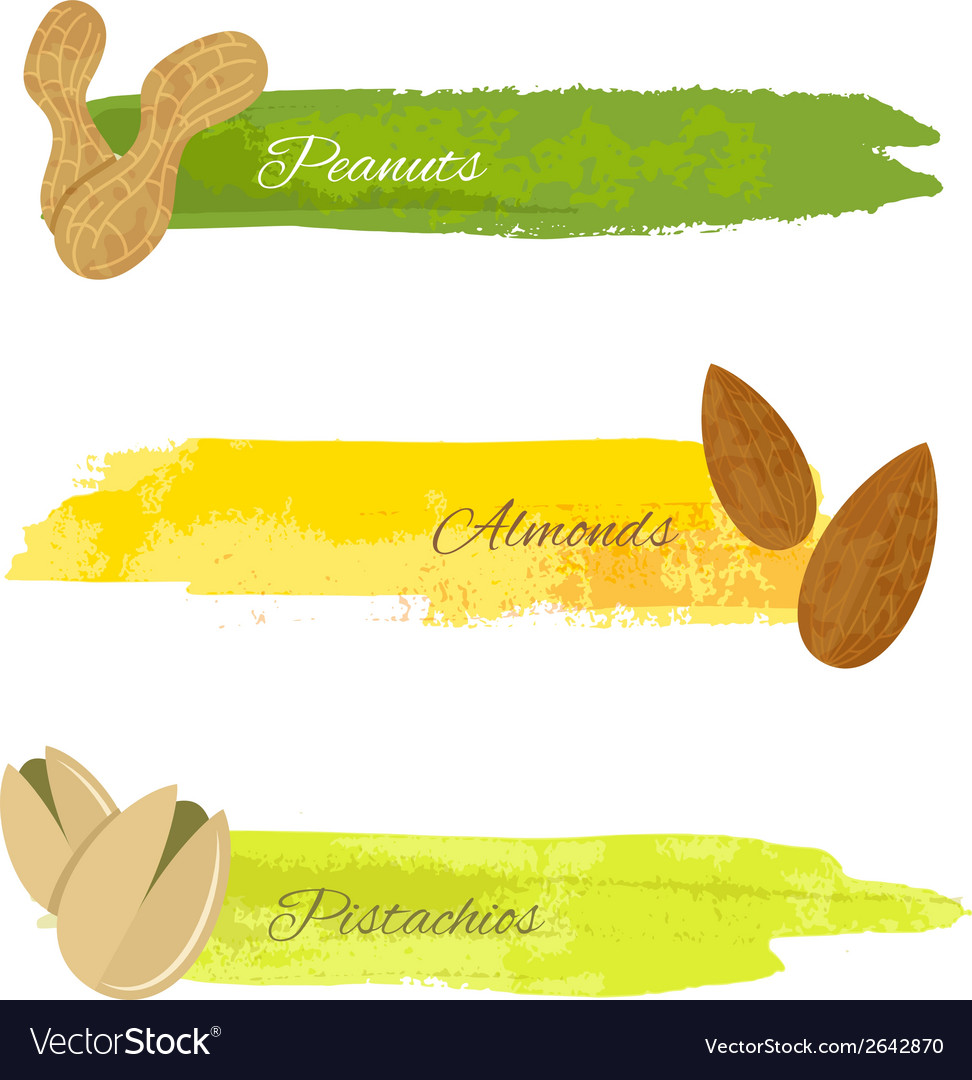 Set of nuts banners vector | Price: 1 Credit (USD $1)