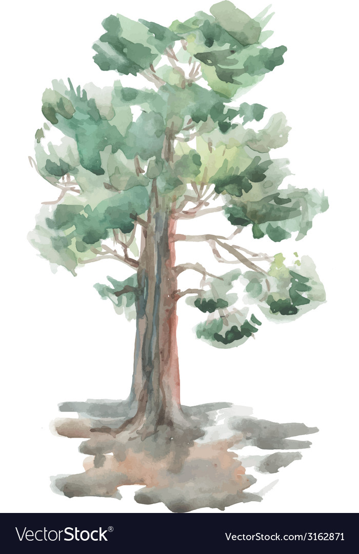 Pine tree on a white background watercolor sketch vector   Price: 1 Credit (USD $1)