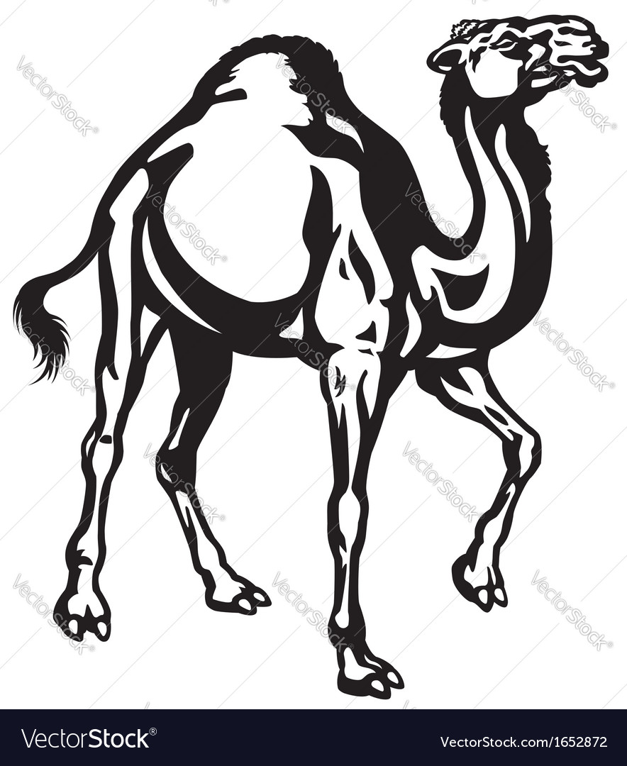 Camel black white vector | Price: 1 Credit (USD $1)
