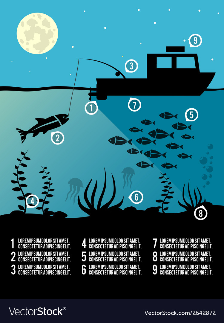 Infographic fishing poster vector