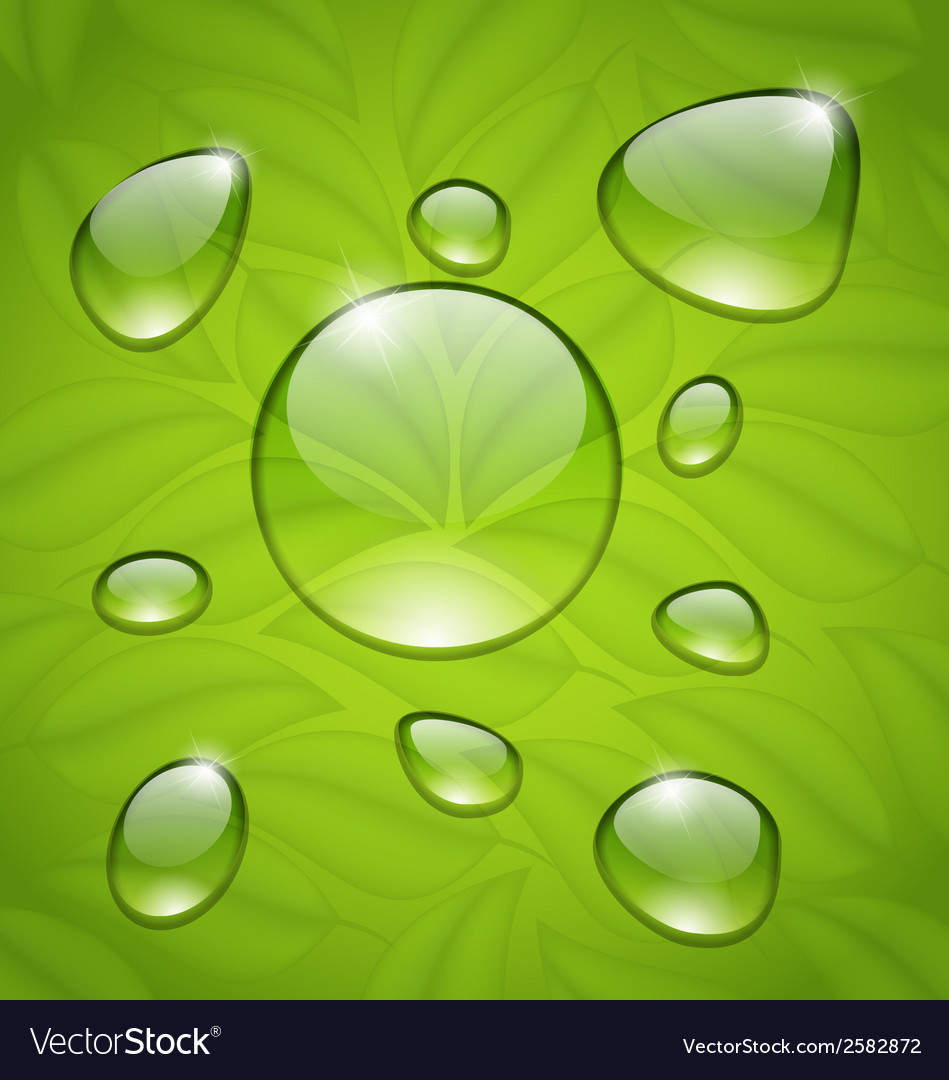 Water drops on fresh green leaves texture vector | Price: 1 Credit (USD $1)