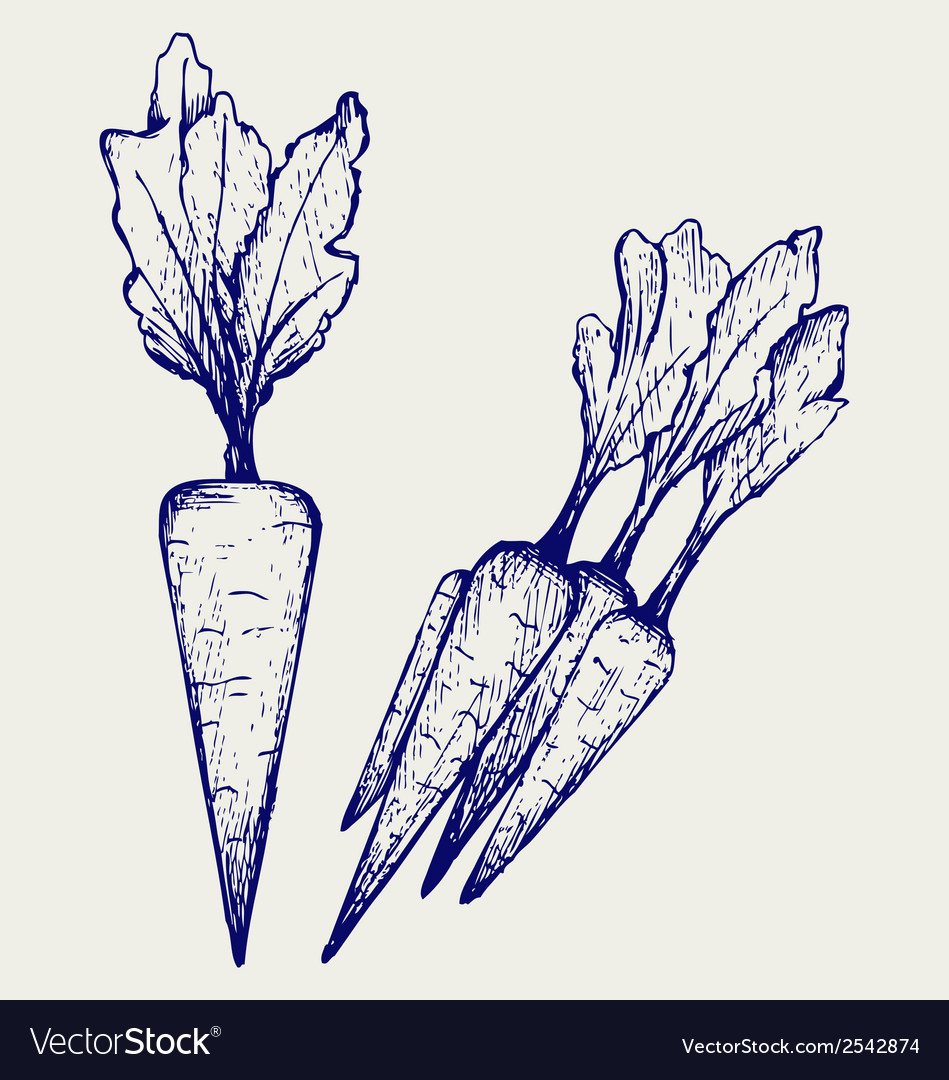 Carrot vegetable with leaves vector | Price: 1 Credit (USD $1)