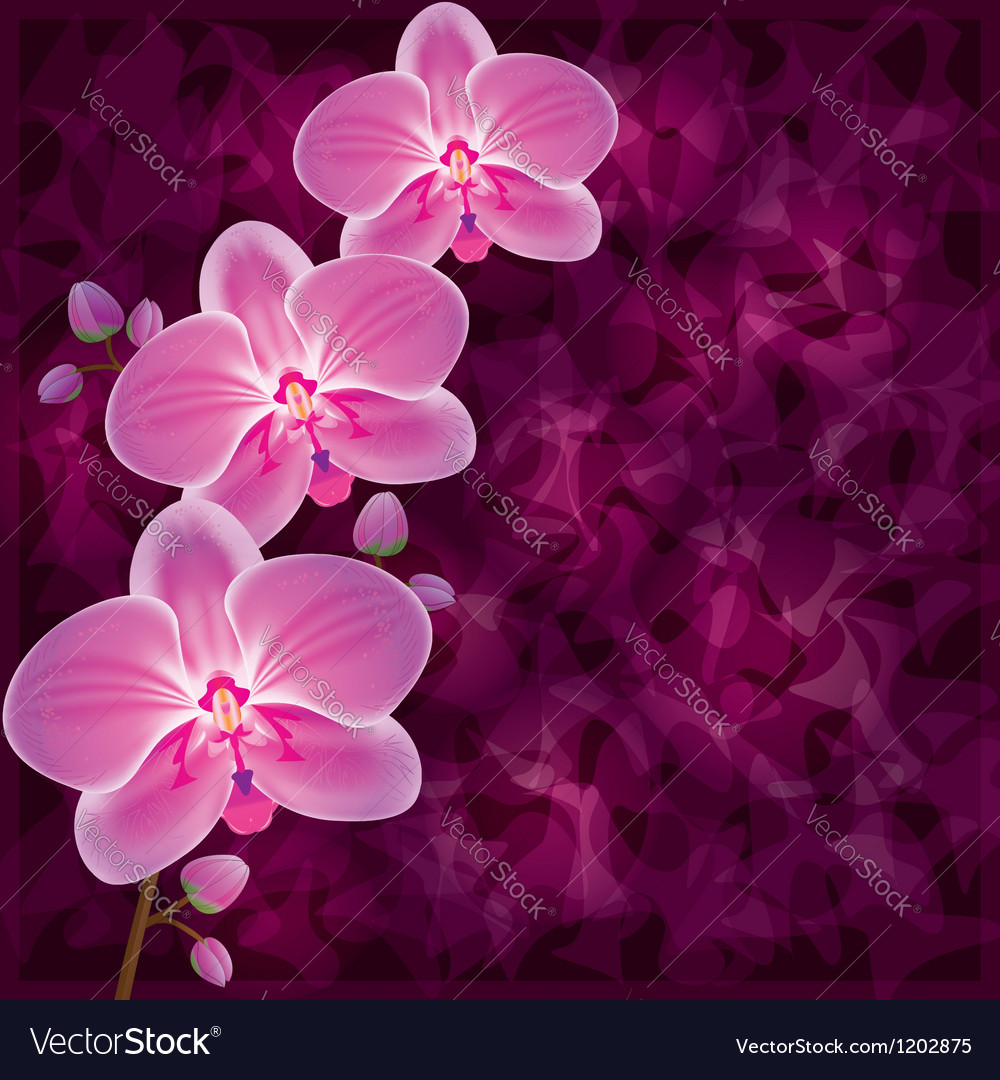 Background with flower orchid invitation or vector | Price: 1 Credit (USD $1)