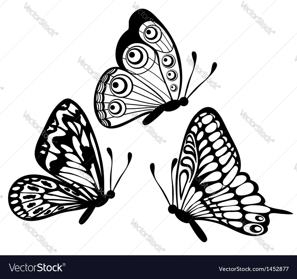 Black and white butterfly isolated on white vector | Price: 1 Credit (USD $1)