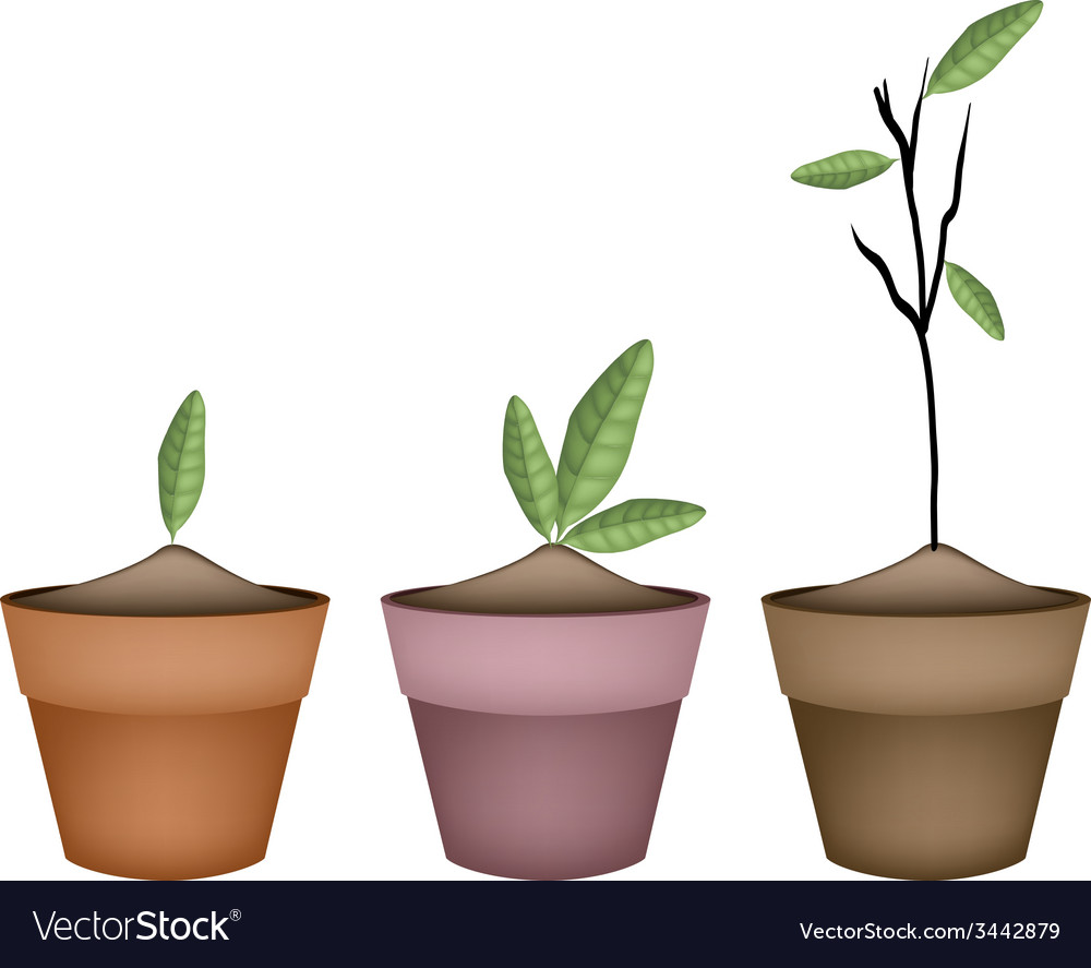 Beautiful ornamental plant in ceramic flower pots vector | Price: 1 Credit (USD $1)