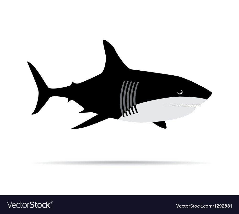 Shark week vector | Price: 1 Credit (USD $1)
