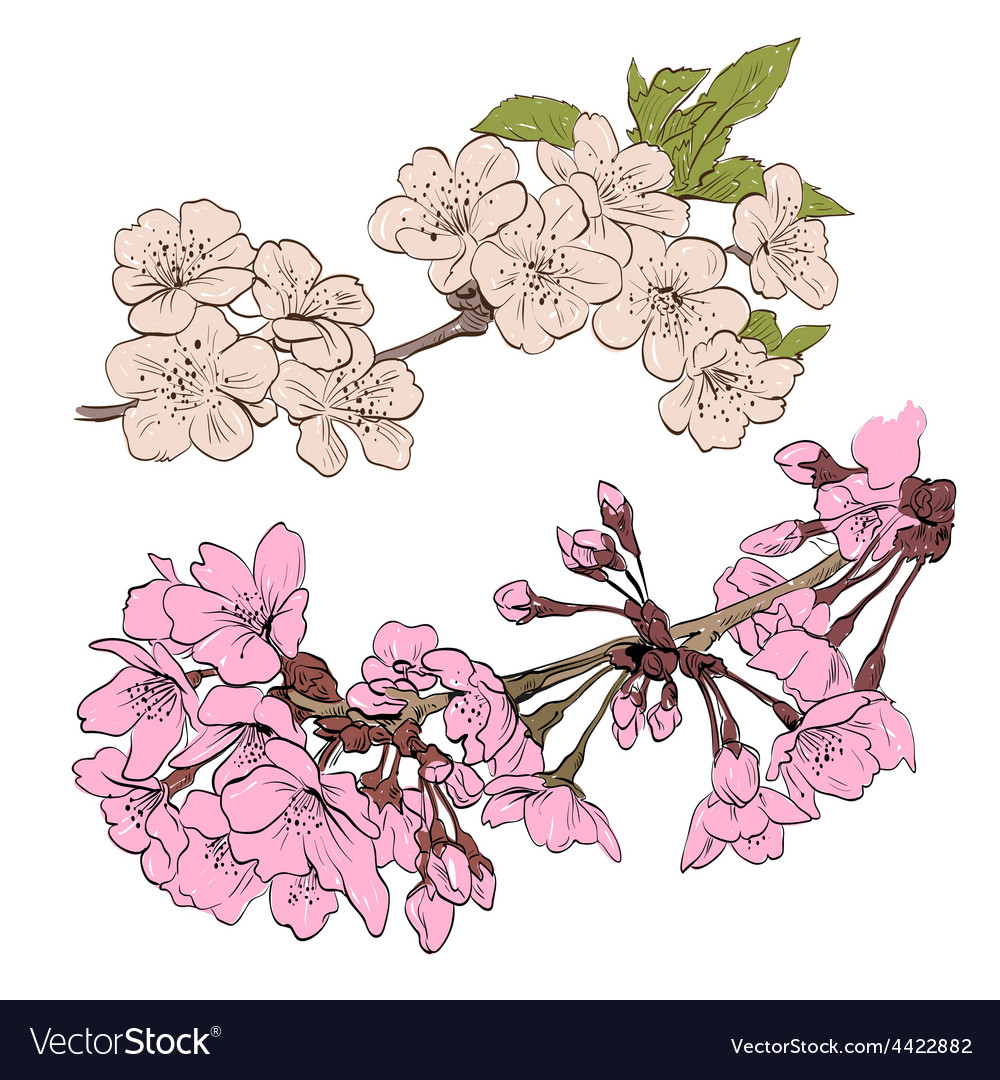 Spring flowers isolated vector | Price: 1 Credit (USD $1)