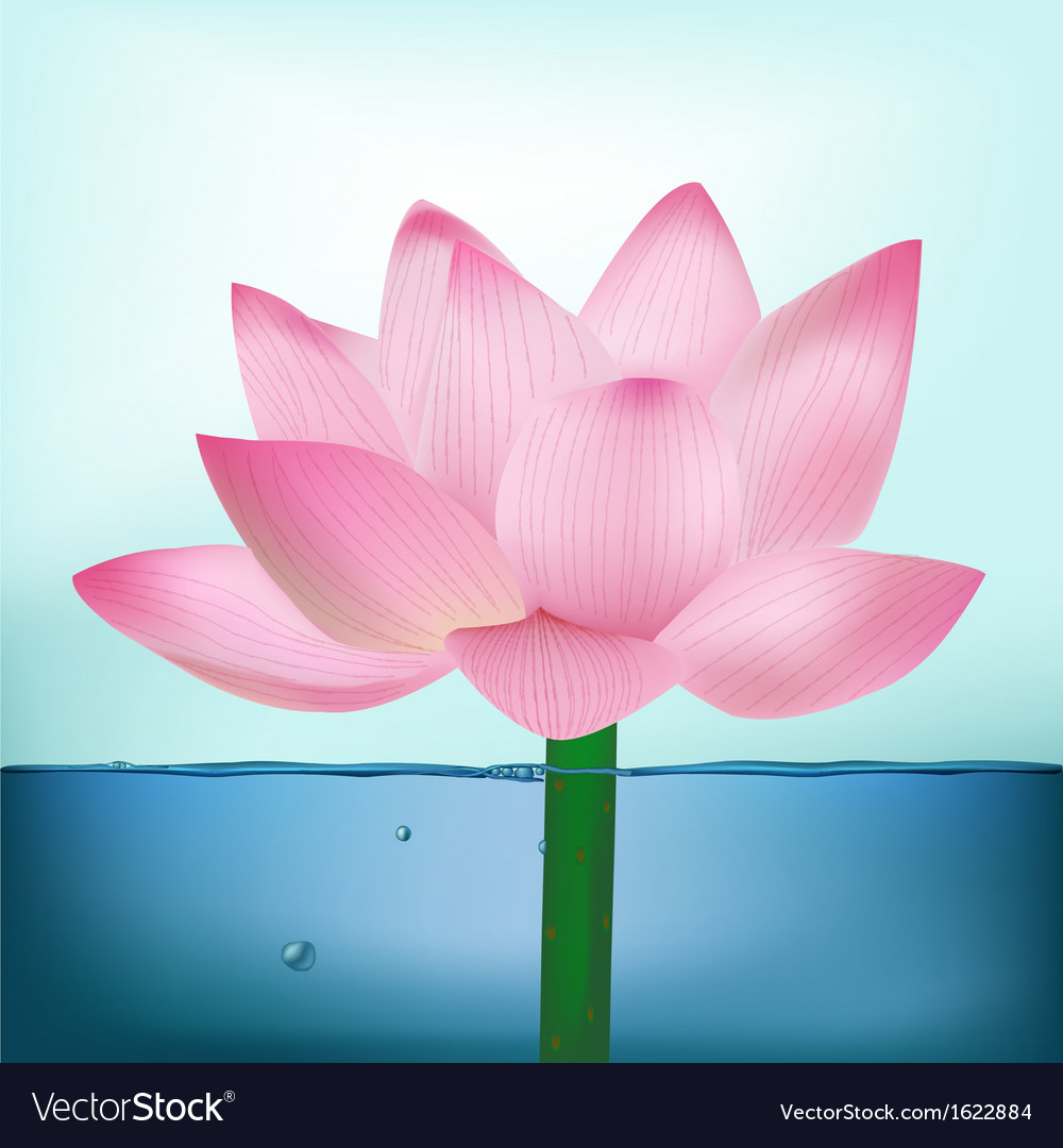 Photo-realistic lotus flower in water vector | Price: 1 Credit (USD $1)