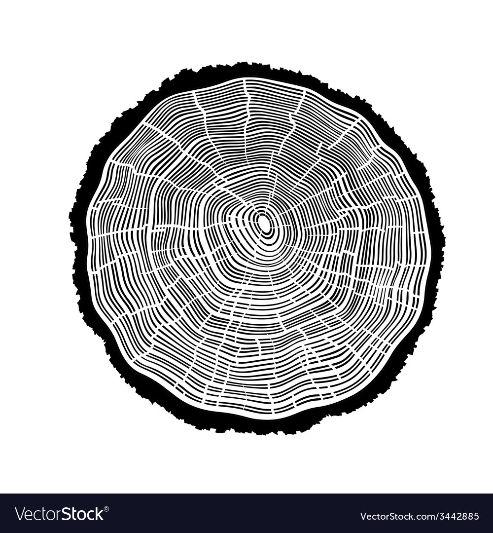 Rings of a tree with cracks vector | Price: 1 Credit (USD $1)