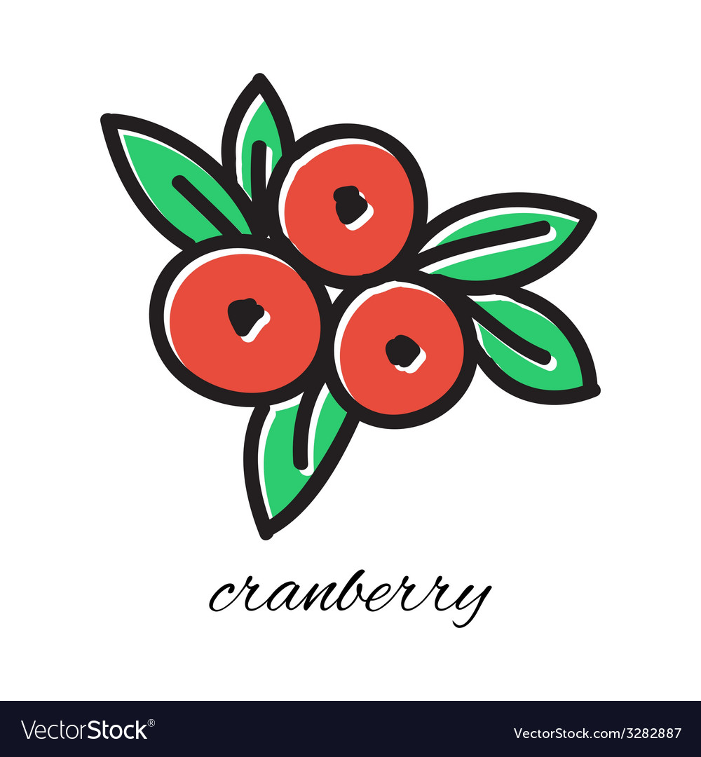 Doodle cranberry hand-drawn object isolated on vector | Price: 1 Credit (USD $1)