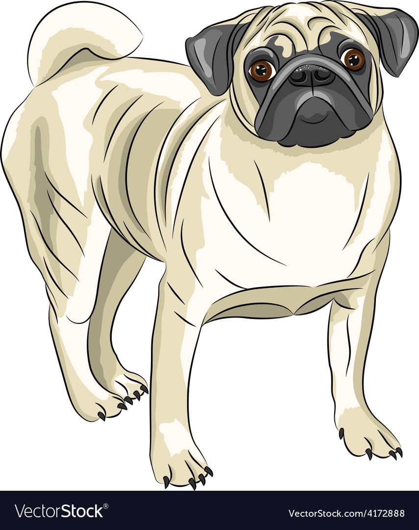 Pug vector | Price: 1 Credit (USD $1)