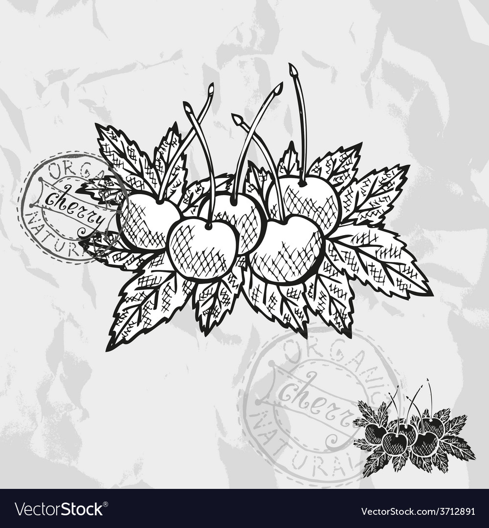 Hand drawn decorative cherry fruits vector | Price: 1 Credit (USD $1)