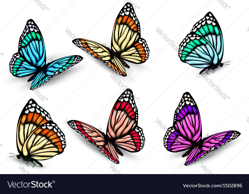 Realistic butterflies set vector | Price: 1 Credit (USD $1)