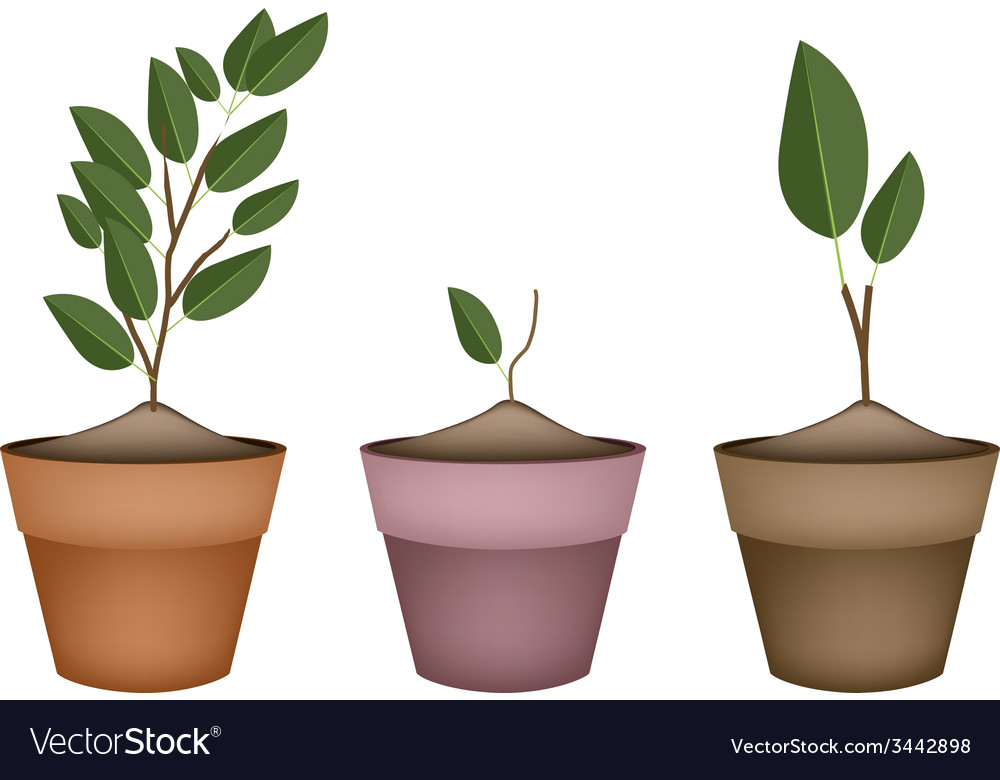 Fresh ornamental trees in ceramic flower pots vector | Price: 1 Credit (USD $1)