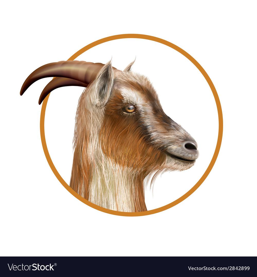 Donkey head vector | Price: 1 Credit (USD $1)