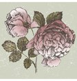 Old style roses vector