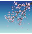 Branch of sakura over sky vector