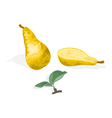 Pear and half of pear with leaves healthy food vector