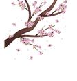 Sakura tree vector