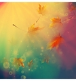 Orange maple leaves autumn concept vector