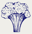 Fresh broccoli vector